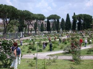 Lo splendido roseto comunale di Roma